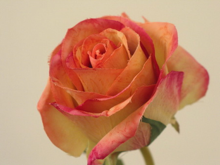 Украшение свадебных бокалов лепестками роз - мастер класс